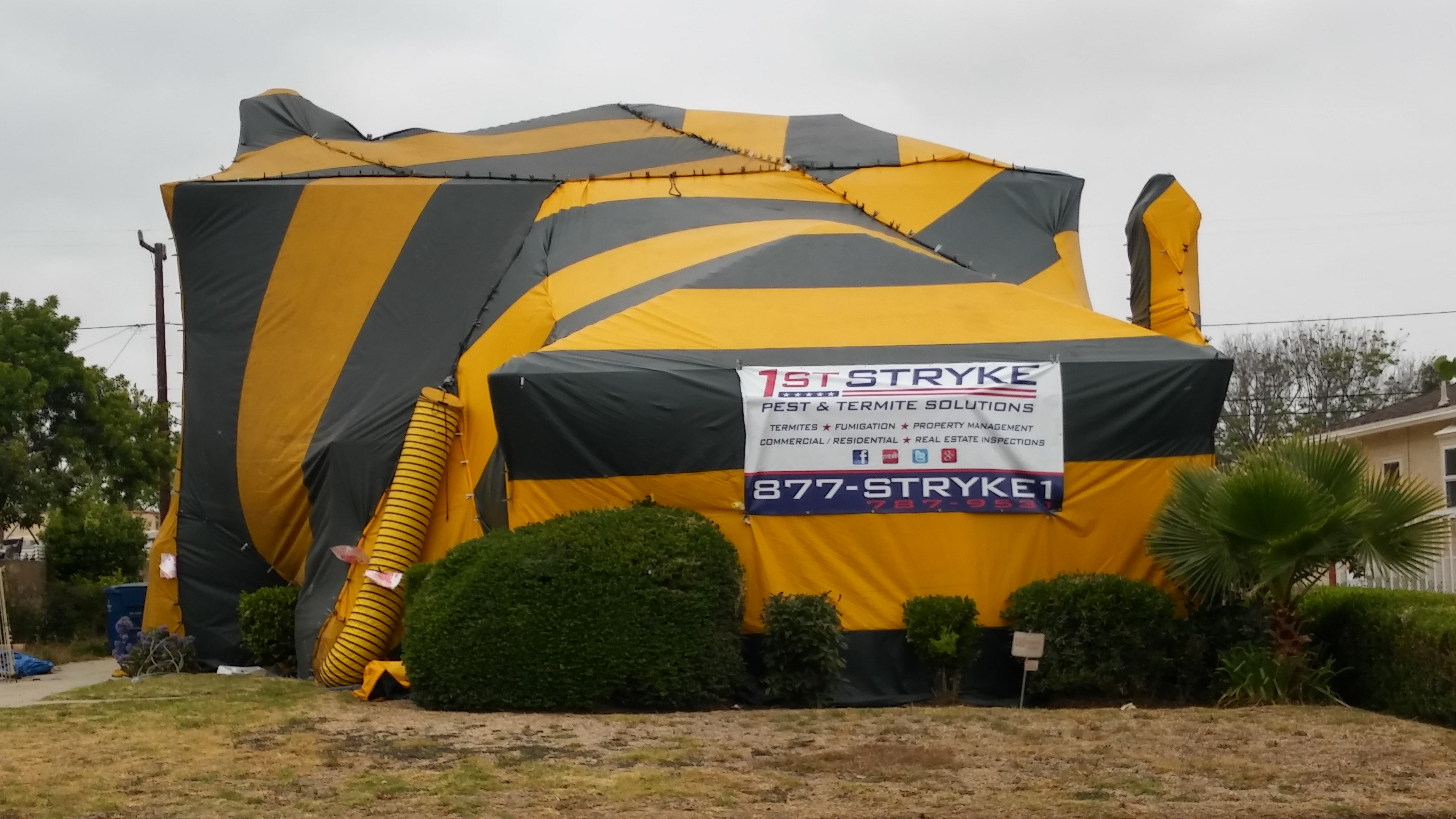 Bee Removal & Pest Control in Norwalk and Torrance CA - 1st Stryke Pest u0026 Termite